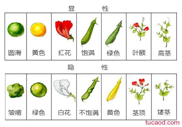 豌豆的七种性状满足了分离定律和自由组合定律
