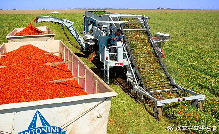 资本主义下的番茄市场_产量大不一定是好事