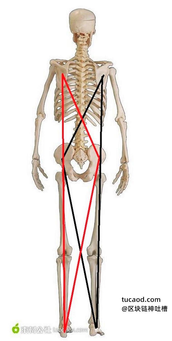 肩胛骨练开之后,就要落在胯上,听骨盆的指挥-玉人桩-戊己真人