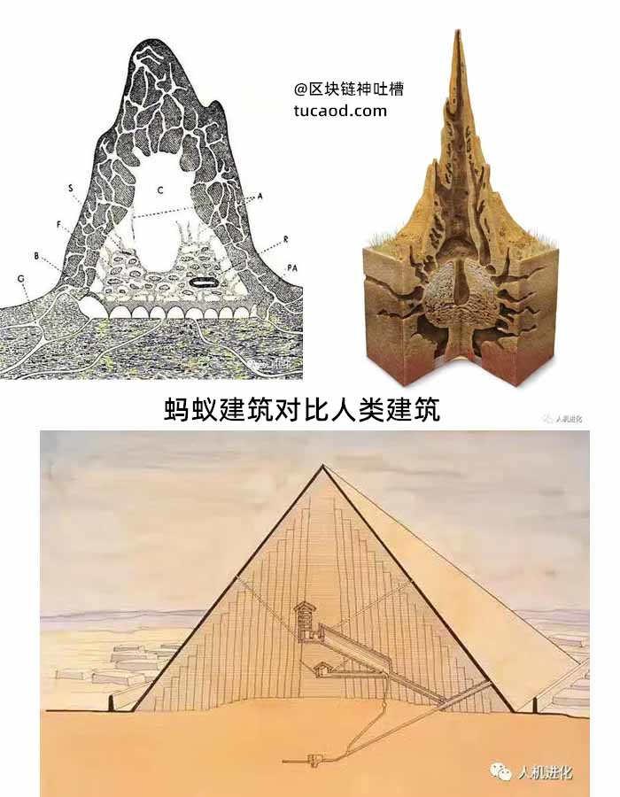 蚂蚁建筑对比人类建筑